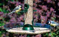 Feeder Seed Trays