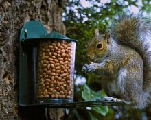 Squirrel feeder(metal)