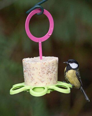 Easy Peasy party Perch(suet cake not included)