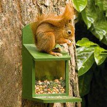 Squirrel Feeder(wooden) PLUS food