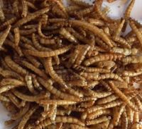 Freeze dried Mealworms 12.55kg box super saver!